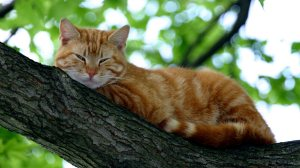 ginger-cat-highest-position