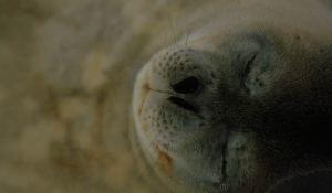 white seal 1