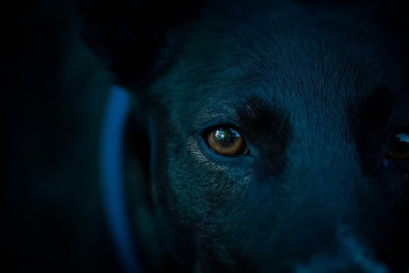 dog-head-1449001_1920